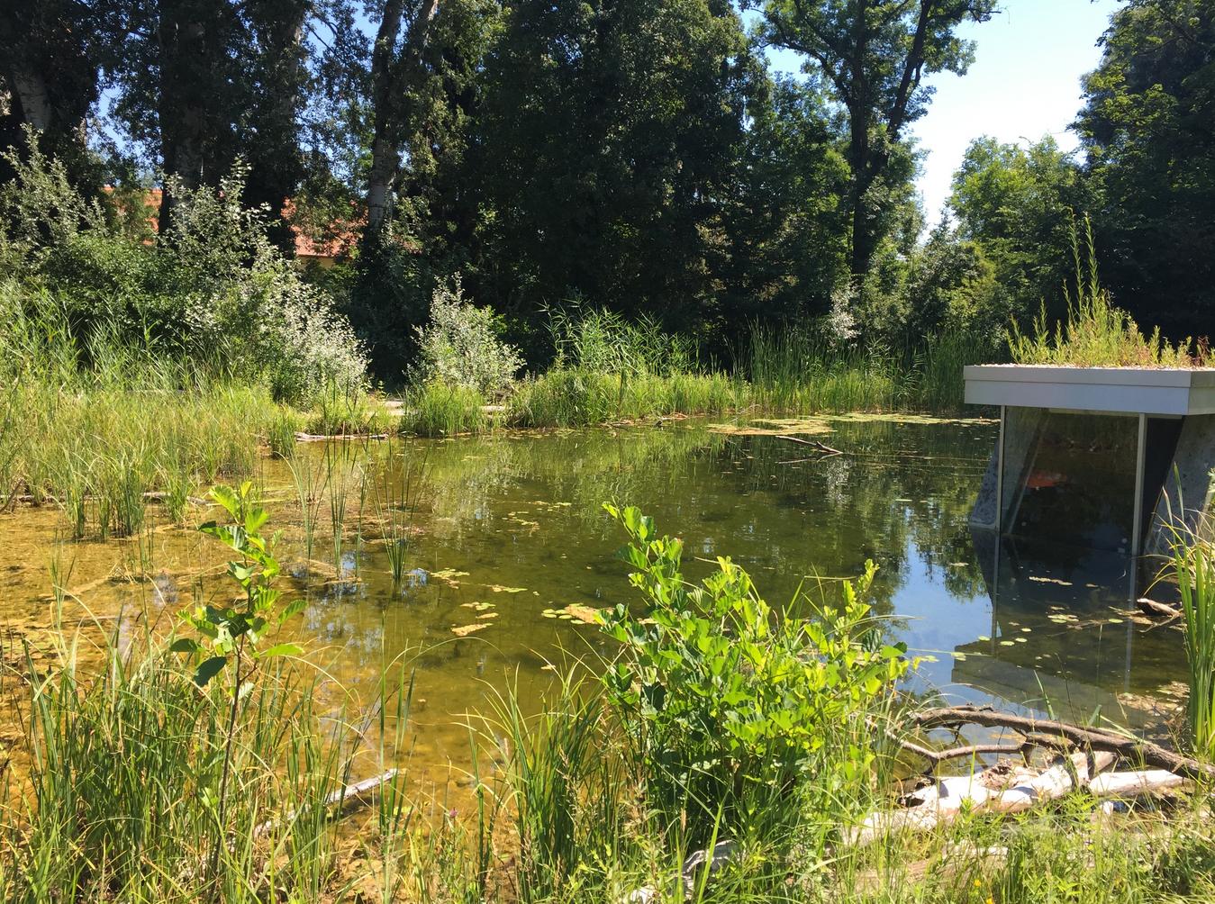 Dieses Bild zeigt die wunderbare Natur im Nationalpark Donauauen.