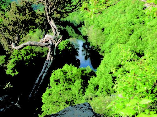 Blick vom Aussichtspunkt am Überstieg auf die Thaya