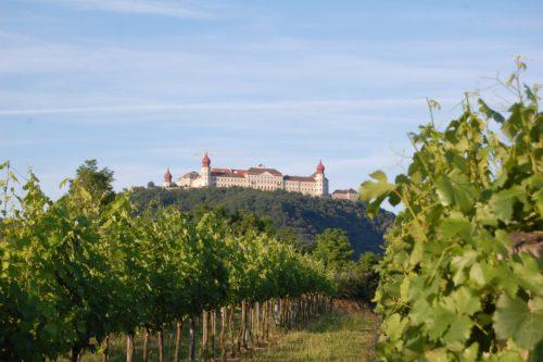 Göttweiger Berg mit Blick durch die Weingärten