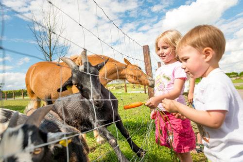 Pferde, Ziegen, Schafe und einige weitere Mitbewohner können bei uns besucht werden!