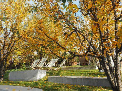 Zieräpfel im Herbst