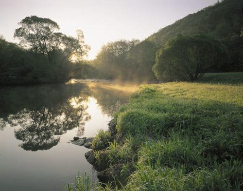 Thaya im Morgennebel