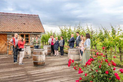 Wein erleben - direkt im Weingarten in der Sandgrube 13
